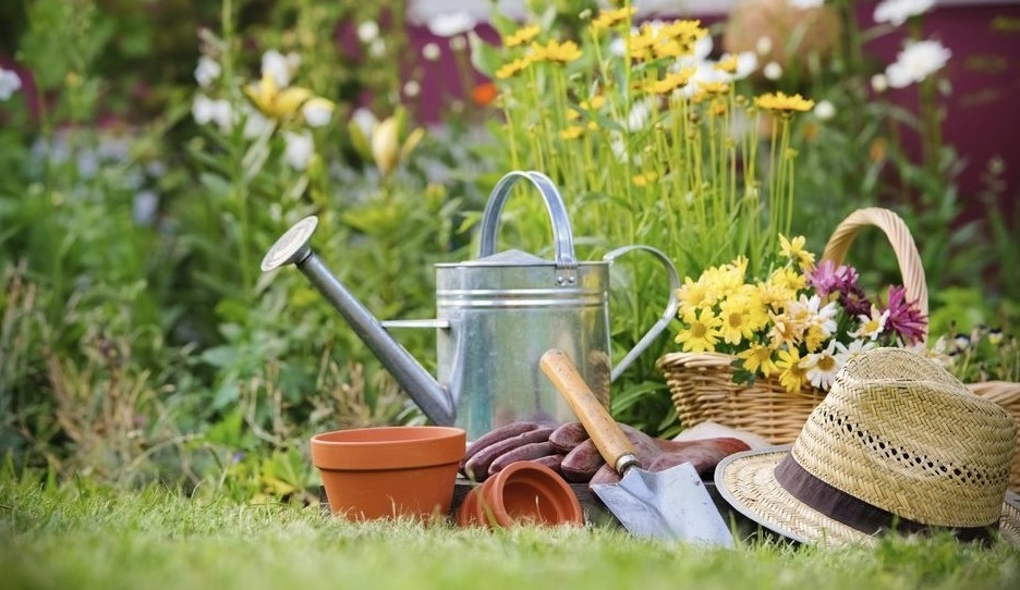 Семь советов для начинающих садоводов и огородников