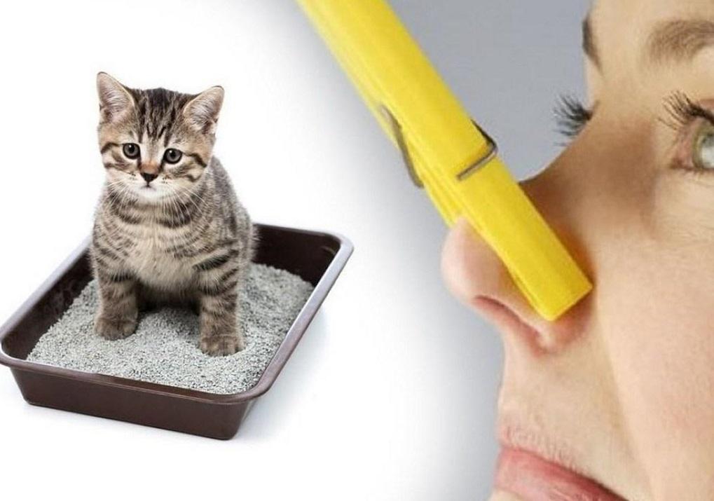 Как убрать кошачий запах в квартире
