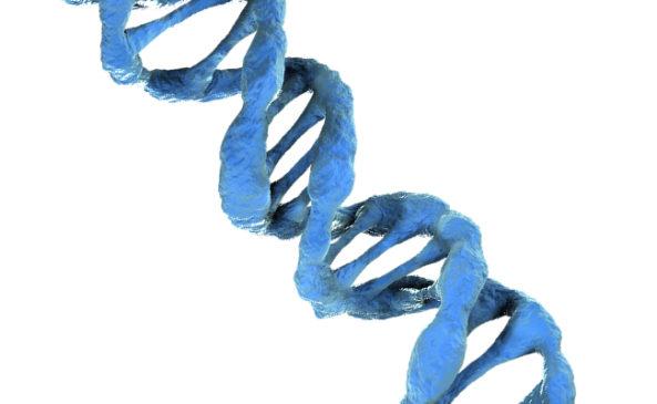 Гены и двойняшки