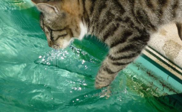 Какие прививки ставят кошкам