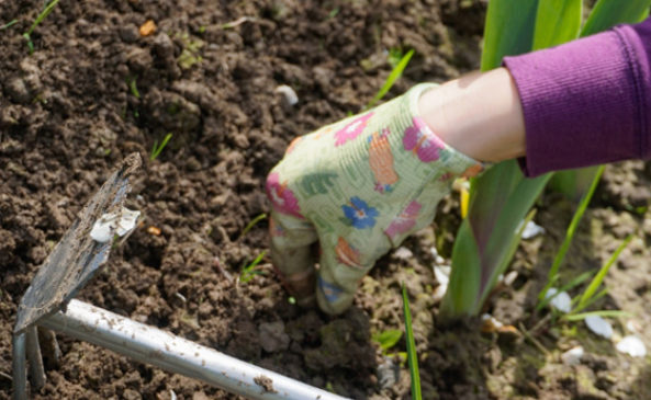 Выдёргивание сорняков с корнем