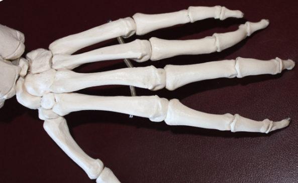 Шпинат для здоровья костей