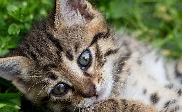 Прививки кошкам по возрасту