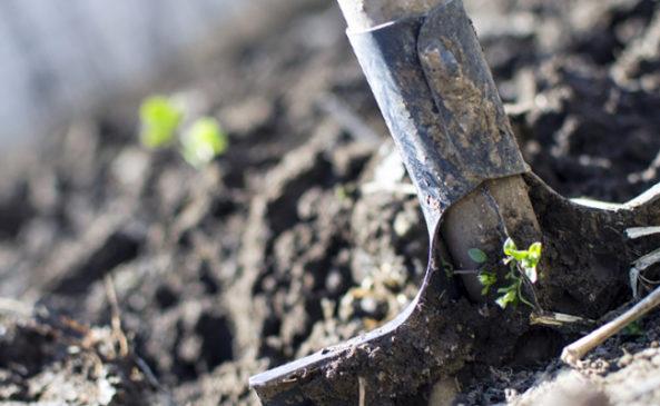 Перекопка почвы для уничтожения сорняков