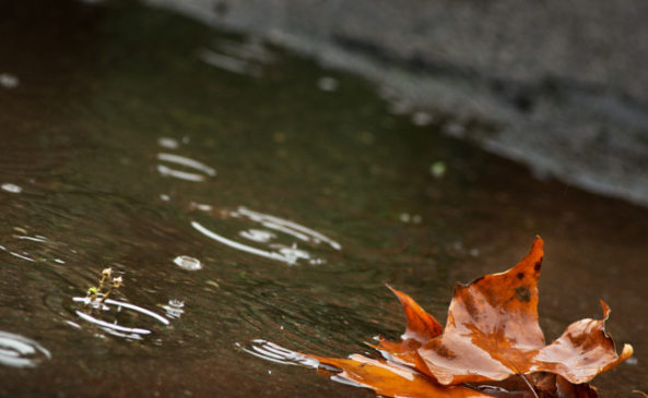 Вода и замша