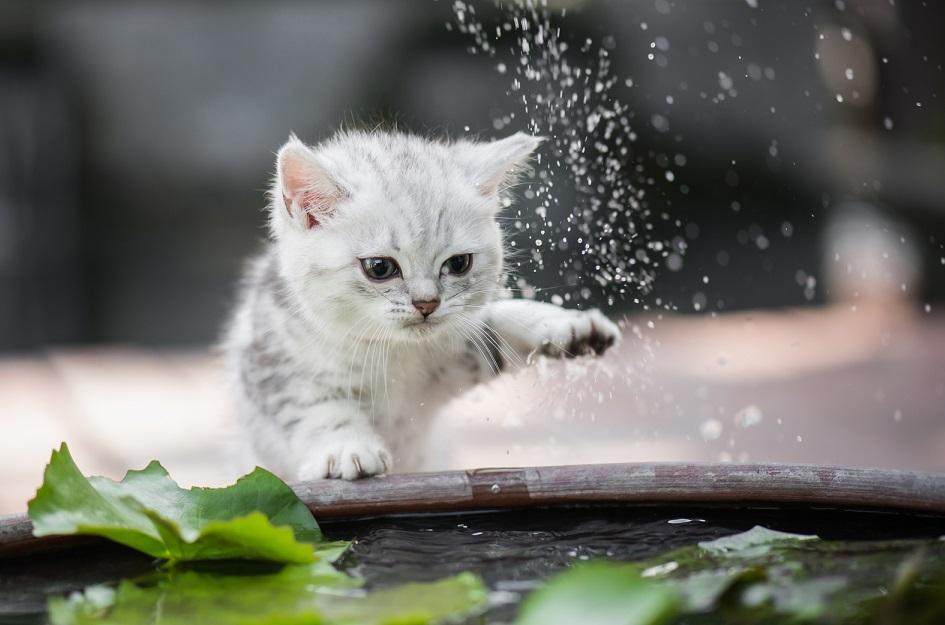 Как приручить дикого котёнка или кошку