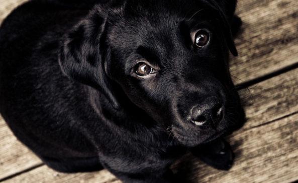 Заболевания глаз у собак