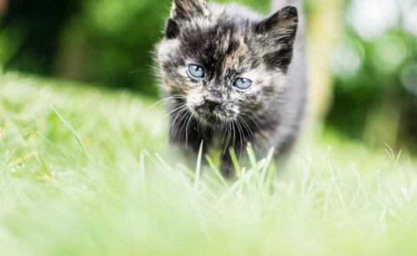 Как приручить дикого котенка к рукам