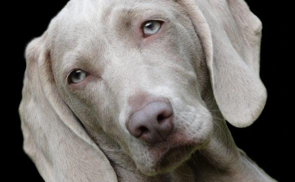 Заболевания глаз у собак с фотографиями