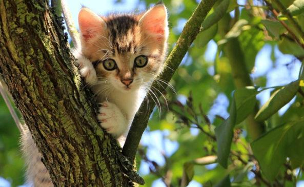 Как приручить дикого котенка с улицы